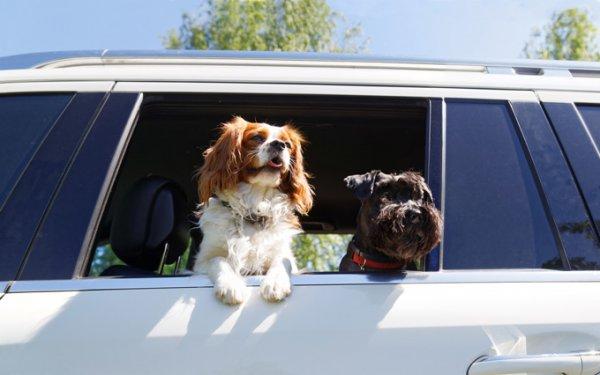 Utazás háziállatokkal
